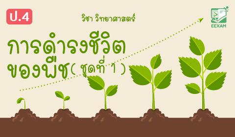 แนวข้อสอบวิทยาศาสตร์ ป.4 เรื่องการดำรงชีวิตของพืช ชุดที่ 1